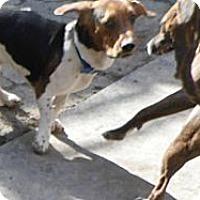 Adopt A Pet :: Lonnie - Cincinnati, OH