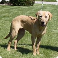 Adopt A Pet :: Queenie - Lewisville, IN
