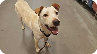 Shepherd (Unknown Type) Mix Dog for adoption in Las Cruces, New Mexico - Jett