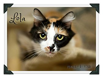 Calico Cat for adoption in Fallbrook, California - Lola
