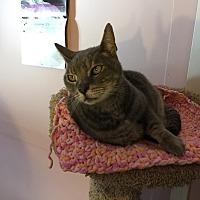 Adopt A Pet :: MORGAN - San Clemente, CA