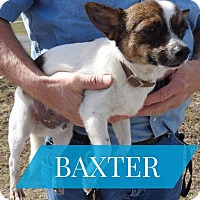 Adopt A Pet :: Baxter - Gainesville, FL