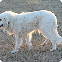 Adopt A Pet :: Jackson LGD - Kyle, TX