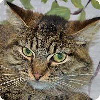 Adopt A Pet :: Loki - Englewood, FL