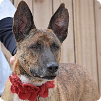 Adopt A Pet :: Thumper - Gilbert, AZ