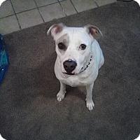 Adopt A Pet :: Neko - Rowlett, TX