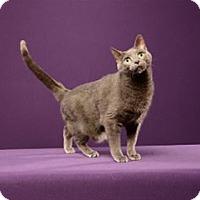 Adopt A Pet :: Sasha (Special Needs) - Cary, NC