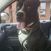 Adopt A Pet :: Jessep - Hartford, CT