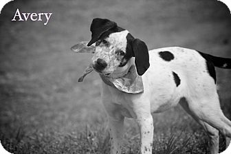 English Pointer/Hound (Unknown Type) Mix Puppy for adoption in Wilmington, Delaware - Avery