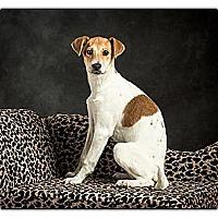 Adopt A Pet :: Joy - Owensboro, KY