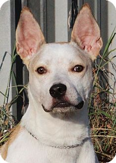 Terrier (Unknown Type, Medium) Mix Dog for adoption in Marble Falls, Texas - Gabby