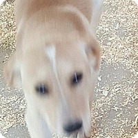 Adopt A Pet :: Molly - Baileyton, AL