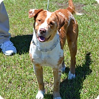 Adopt A Pet :: Ruffles - Barnwell, SC