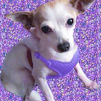 Adopt A Pet :: Miss Piggy needs her mommie - Sacramento, CA