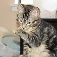 Adopt A Pet :: Marlena (Marley) - Walnut Creek, CA