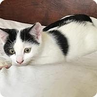 Adopt A Pet :: Sophia - Sherman Oaks, CA