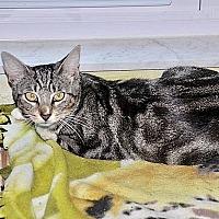 Adopt A Pet :: Venus - Tampa, FL
