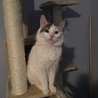 Adopt A Pet :: Holly - Orange City, FL