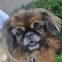 Adopt A Pet :: Shelby - Atlanta, GA