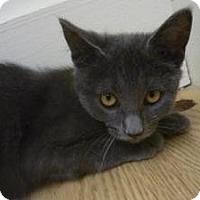 Adopt A Pet :: Braiden - Milwaukee, WI
