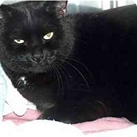 Adopt A Pet :: Inky - Quincy, MA