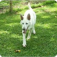 Adopt A Pet :: Hanz - Evansville, IN