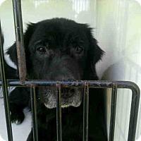 Adopt A Pet :: Mason - New Canaan, CT