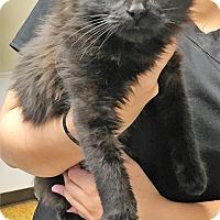 Adopt A Pet :: AL - Toledo, OH