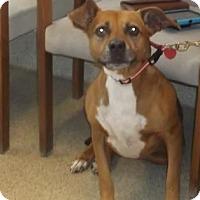 Adopt A Pet :: LUCY - Gloucester, VA