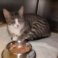 Adopt A Pet :: Blaze - Dothan, AL