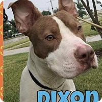 Adopt A Pet :: Dixon - Taylor, MI