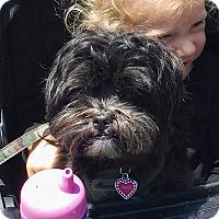 Adopt A Pet :: Heidi. Want an Angel? - Corona, CA