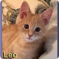 Adopt A Pet :: Leo - Aldie, VA