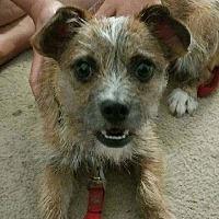 Adopt A Pet :: Scooter - Wymore, NE