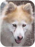 Husky Mix Dog for adoption in Kettle Falls, Washington - Sula