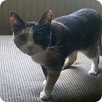 Adopt A Pet :: Ada - Port Republic, MD