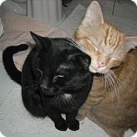 Adopt A Pet :: Oscar & Wolfie (Bonded BFF's) - Arlington, VA