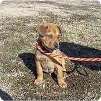 Adopt A Pet :: Grissom - in CT! - Adamsville, TN