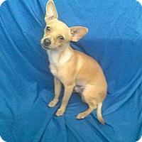 Adopt A Pet :: Dylan - San Francisco, CA