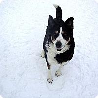 Adopt A Pet :: Harley - Denver, CO