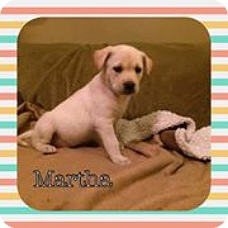 Labrador Retriever Mix Puppy for adoption in Racine, Wisconsin - Martha
