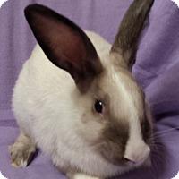 Adopt A Pet :: Gracelin - Williston, FL