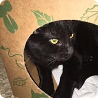 Adopt A Pet :: Josey - Medina, OH