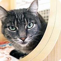 Adopt A Pet :: Max - Bellevue, WA