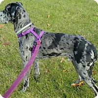 Adopt A Pet :: George - York, PA