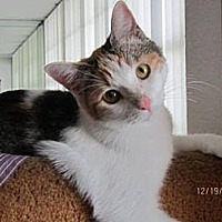 Adopt A Pet :: Julie - Miami, FL