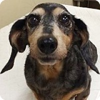 Adopt A Pet :: Florence Ford - Houston, TX