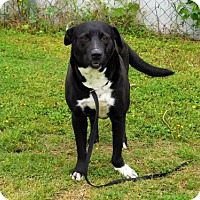 Adopt A Pet :: Chanda-021512k - Tupelo, MS