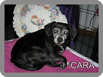 Terrier (Unknown Type, Medium) Mix Dog for adoption in Port Clinton, Ohio - CARA