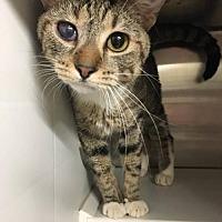 Adopt A Pet :: Constance - Herndon, VA